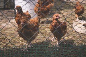 beneficios de instalar cámaras de vigilancia en granjas